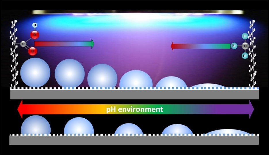 A New Straightforward Protocol for the Fabrication of Smart Coatings