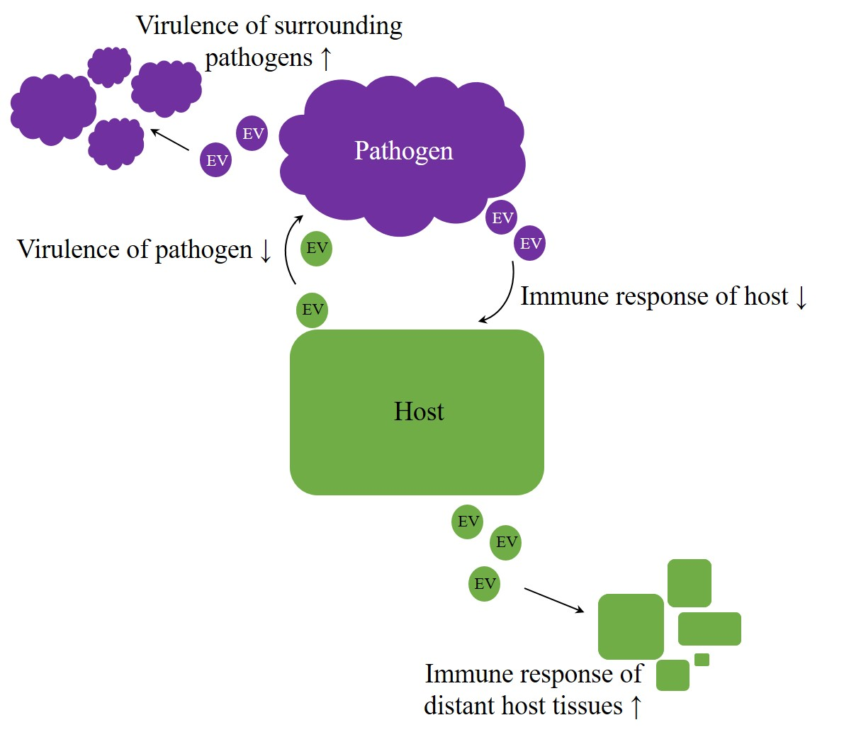 Arms race in host–pathogen interaction