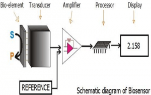 One scheme that show how the biosensor works
