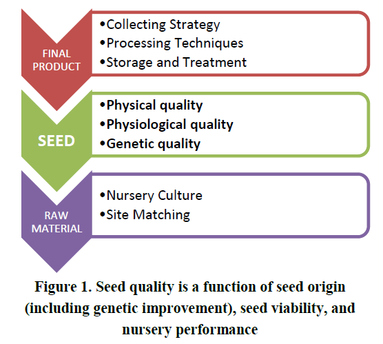 Seed quality is a function of seed origin (including genetic improvement), seed viability, and nursery performance